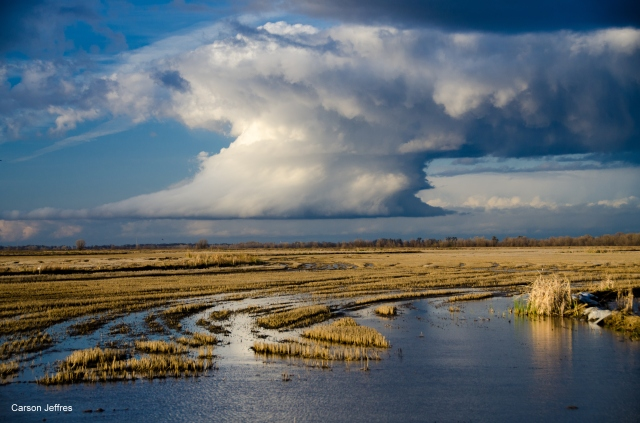Rice farm in the Yolo Bypass. Photo by Carson Jeffres