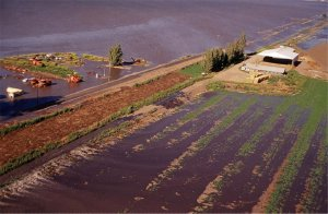 Submerged crops on Delta's flooded Jones Tract island, 2004. Source: Calif. Dept. of Water Resources