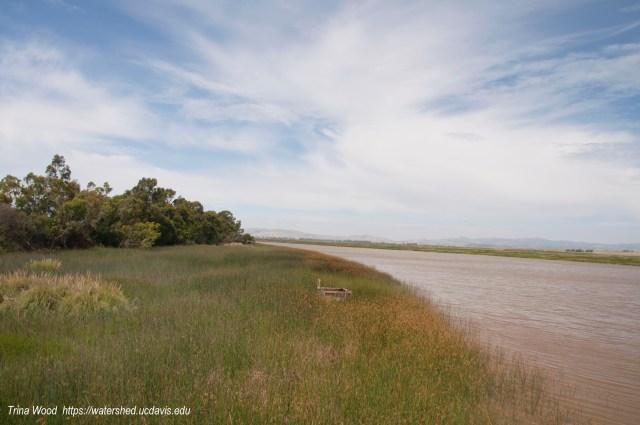 Suisun Marsh. Photo by Trina Wood/UC Davis