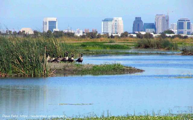 The Yolo Bypass west of Sacramento (background) shows that wildlife, flood control and agriculture can coexist in an urban region. Photo by Dave Feliz