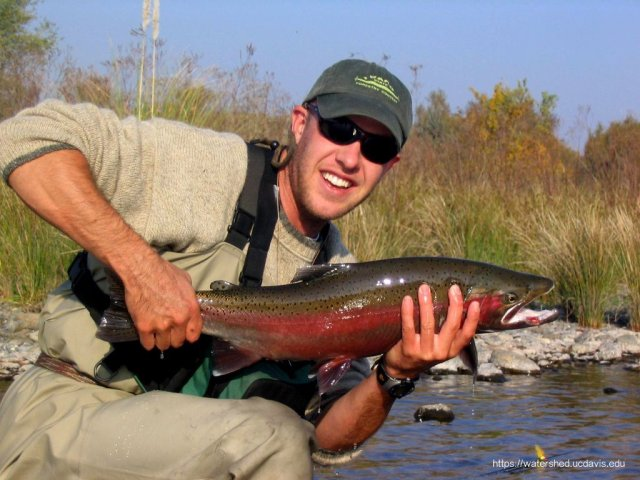 Carson Jeffres, field and lad director of the UC Davis Center for Watershed Sciences cradles a wild Central Valley steelhead he caught and released in the Feather River.