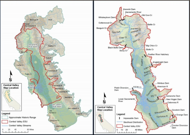 (Left) Historic distribution of steelhead in the Central Valley, with current distribution outlined in red. (Right) Dams block all fish access to areas upstream. Source: California Department of Fish and Wildlife. http://bit.ly/18NH5Aj