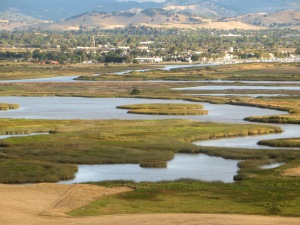The Fairfield-Suisun City urban area runs up against gthe marsh. Photo by Peter Moyle