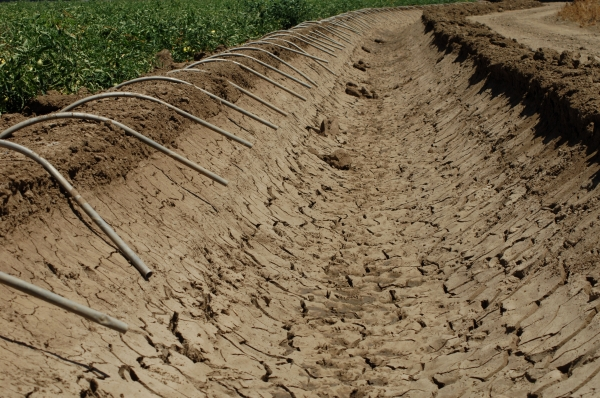 Ground view showing drought conditions in agriculture field.