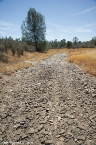 This stretch of Six-bit Gulch near Sonora, where Red Hills roach has dried up because of the drought. Photo by Karin Higgins/UC Davis, Aug. 14, 2014