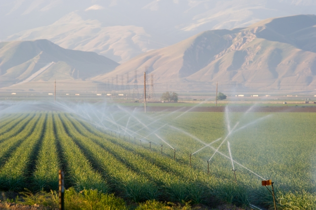 Water, a precious commodity, irrigates a field in southern San Joaquin Valley. wheat. near Bakersfield. Photo nu John R. Chacon/California Department of Water Resources