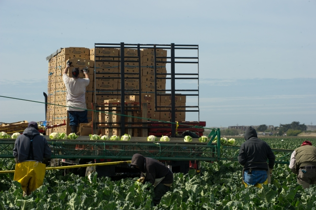 Various crops grown in Monterey County. * FOR EDITORIAL USE ONLY *