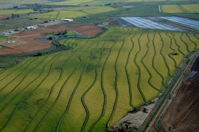 Aerial view of rice fields near Sacramento, California. Photo by Paul Harnes/California Department of Water Resources