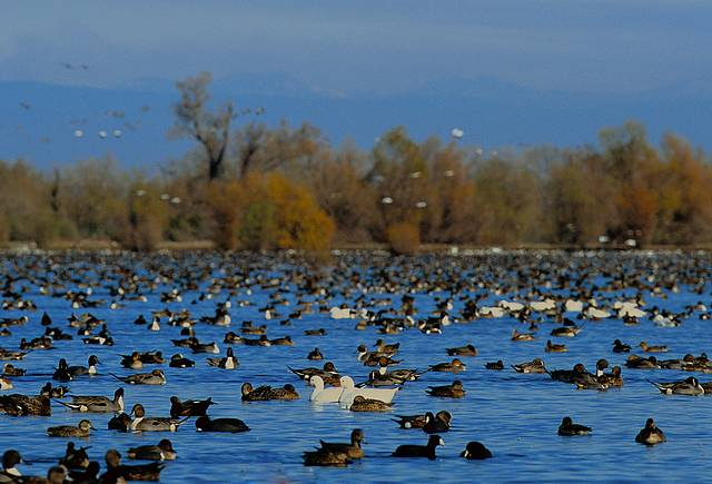 Butte Sink Wildlife Management Area. Photo by U.S. Fish and Wildlife Service