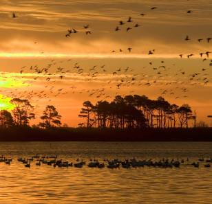 Sacramento National Wildlife Refuge. Photo by U.S. Fish and Wildlife Service