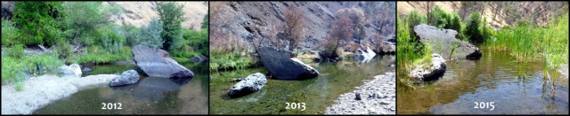 Time-lapse videos show changes in riparian vegetation on the Clavey River before (2012) during (2013) and after (2015) the Rim fire. Heavy sedimentation following the fire allowed plants and trees to take root. Source: UC Davis Center for Watershed Sciences