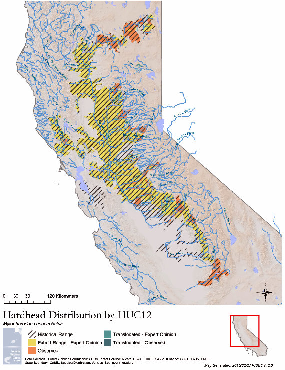 Sample range map for hardhead generated by PISCES 2.0. Source: UC Davis Center for Watershed Sciences