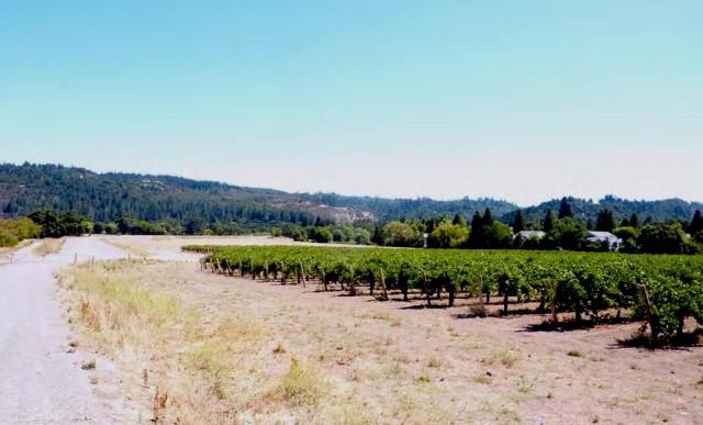 vineyard valley levee