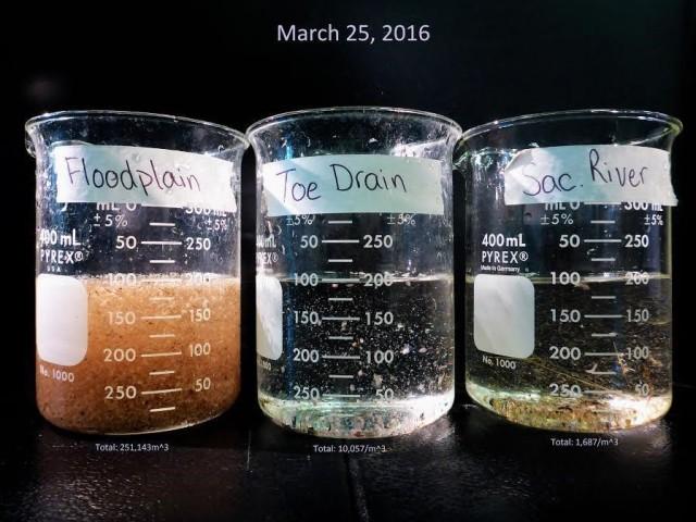 zooplankton2